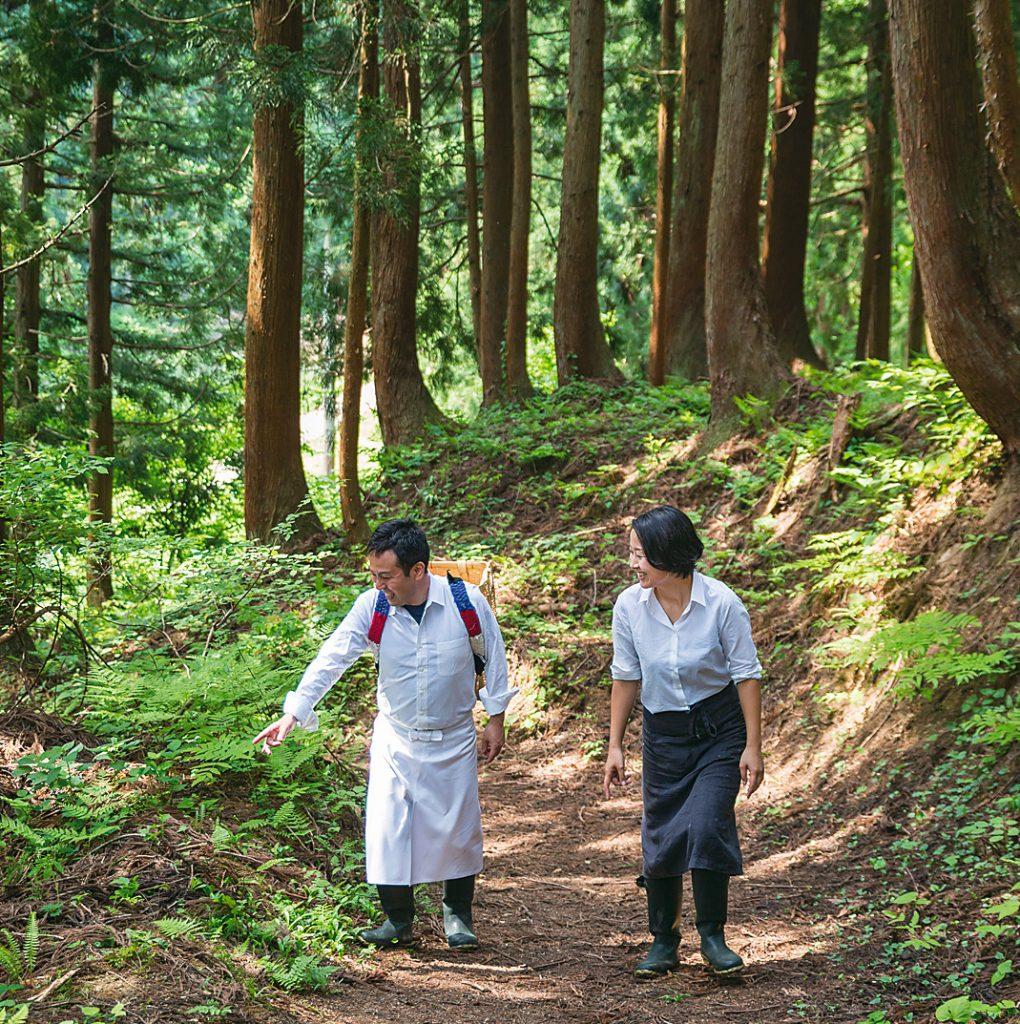 foraging in mountain back of Satoyamajujo which is one of the modern luxury hotel in YUKIGUNI, Japan.