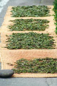 Dry edible wild plants in YUKIGUNI, Japan