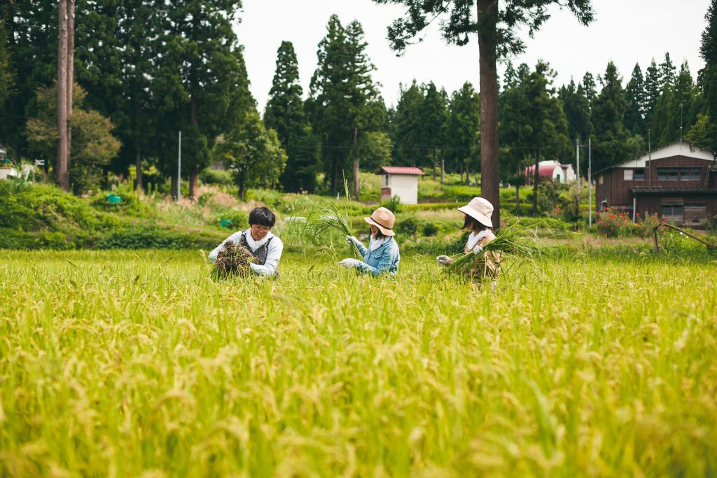 Caring for Japanese rice fields