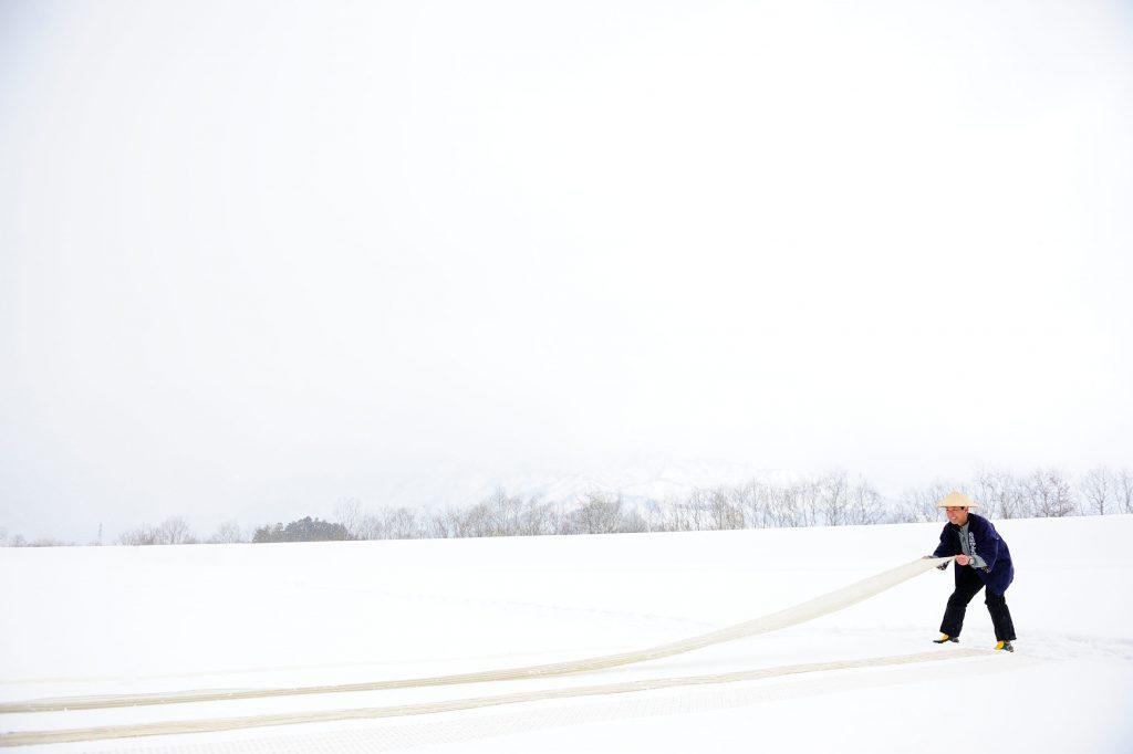 """""""Yukisarashi"""" (snow bleaching)"""
